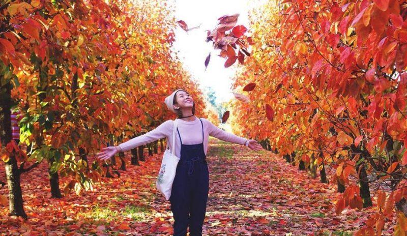 5 claves para un buen otoño